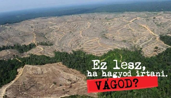 Ötven millió euróba fájnak az erdőirtások Romániában