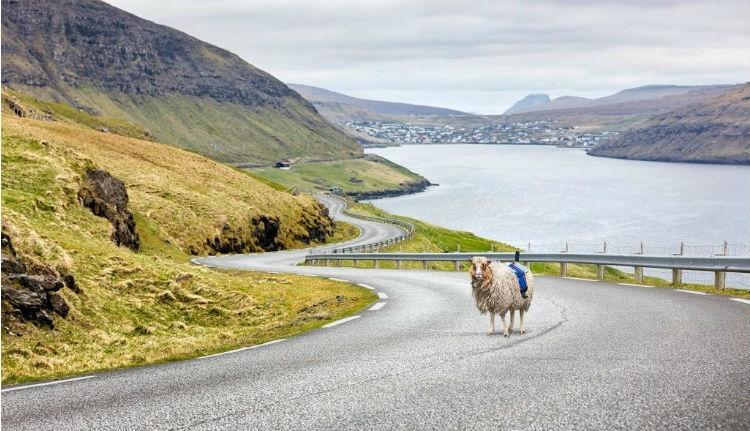 Birkák végzik az utcakép-készítést a Feröer-szigeteken