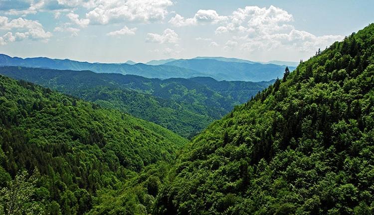 Hétszáz hektár erdőt pusztított el a vihar a napokban (VIDEÓ)