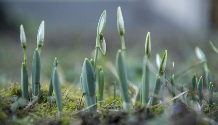 Téli tavaszra számíthatunk ezen a héten