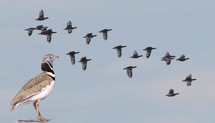 """Itthonról rég eltűnt madárfajt """"lőtt"""" a Milvus Csoport"""