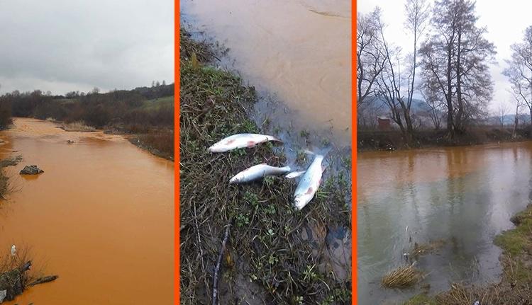 Ökológiai katasztrófába torkollt a Lápos folyó bányavizes szennyezése (VIDEÓval)