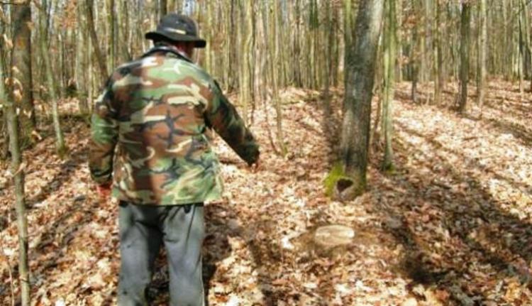 Románia az erdészek rémálma, és nem a medvék miatt