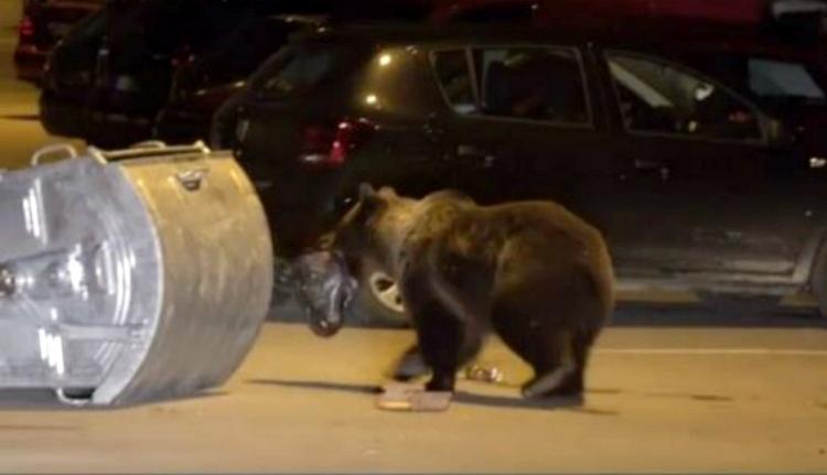 Önfeledten randalíroznak a mackók éjszakánként az egyik legfelkapottabb romániai üdülőhelyen (VIDEÓ)