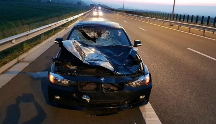 Termetes szarvast csapott el egy sofőr az A10-es autópályán