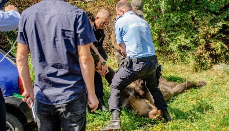 Eljáratja a medvetáncot a környezetvédelmi tárcával egy székelyföldi vadásztársulás