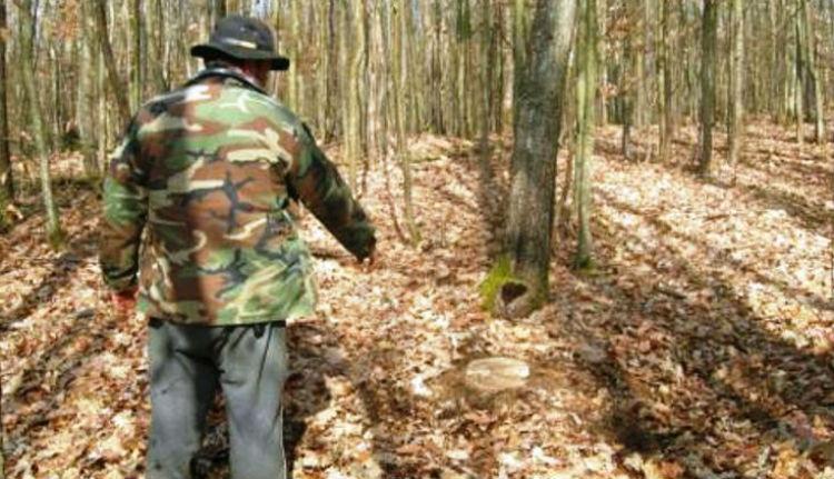 Erdészt öltek a fatolvajok az egyik partiumi megyében