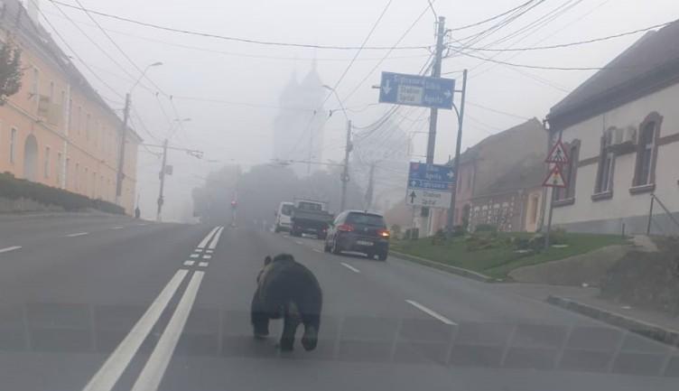Ez a medve úgy döntött, hogy a reggeli kocogást Medgyes utcáin ejti meg (VIDEÓval)