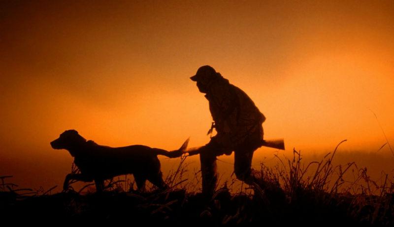 Önfeledt kutyamészárlásba torkollt egy vadászat Maros megyében