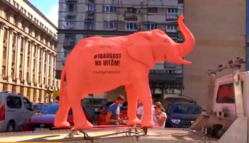 Rózsaszín elefánt Bukarest utcáin: több helyen is tiltakoztak augusztus 10-e eltussolása ellen (VIDEÓval)