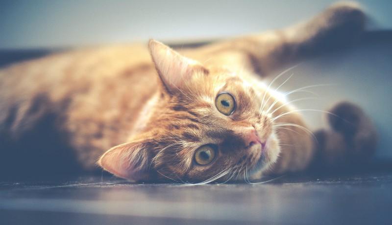Durva összegű pénzbírságot kapott egy nő, mert kidobta a macskáját