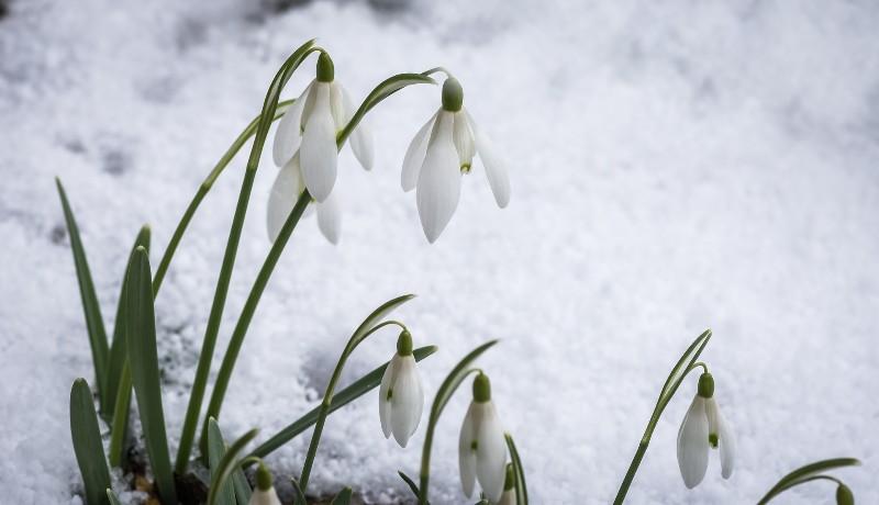 Remélhetőleg a tavasz előtt utoljára mutatja meg magát a tél