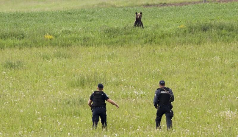 Ha ezt elfogadják, ezentúl nem kell Bukarest engedélyére várni a medvék kilövéséhez