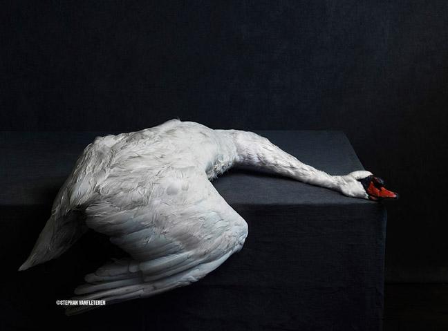 Stephan Vanfleteren artisttalk Present Fomu