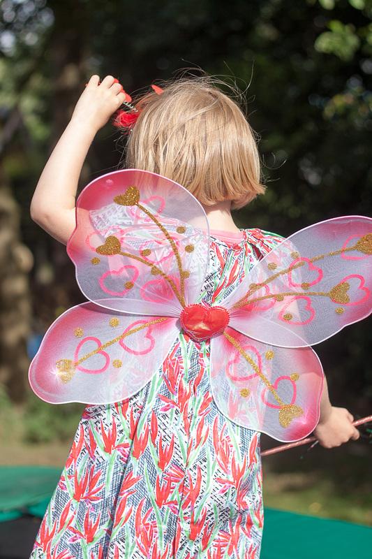 Vlinders in de tuin  FotoAtelier Tanja Borms