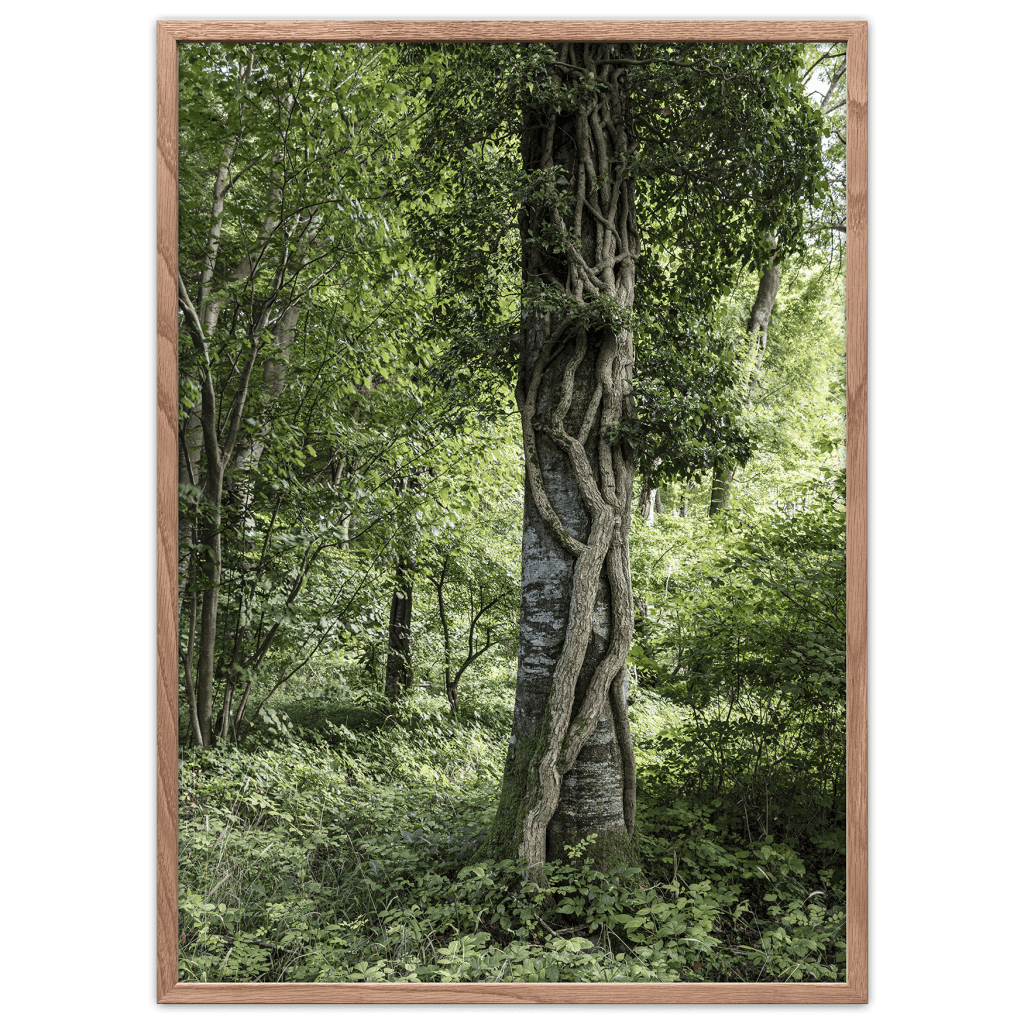 Forest reserve poster