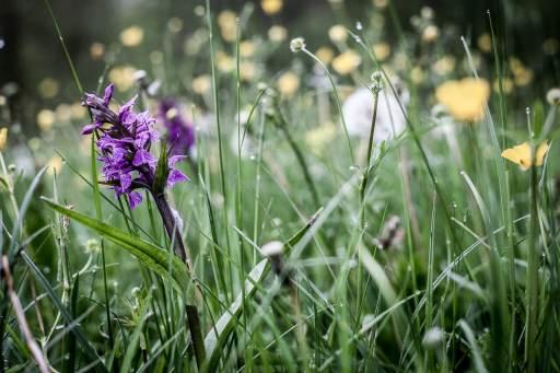 Fotokunst orkide