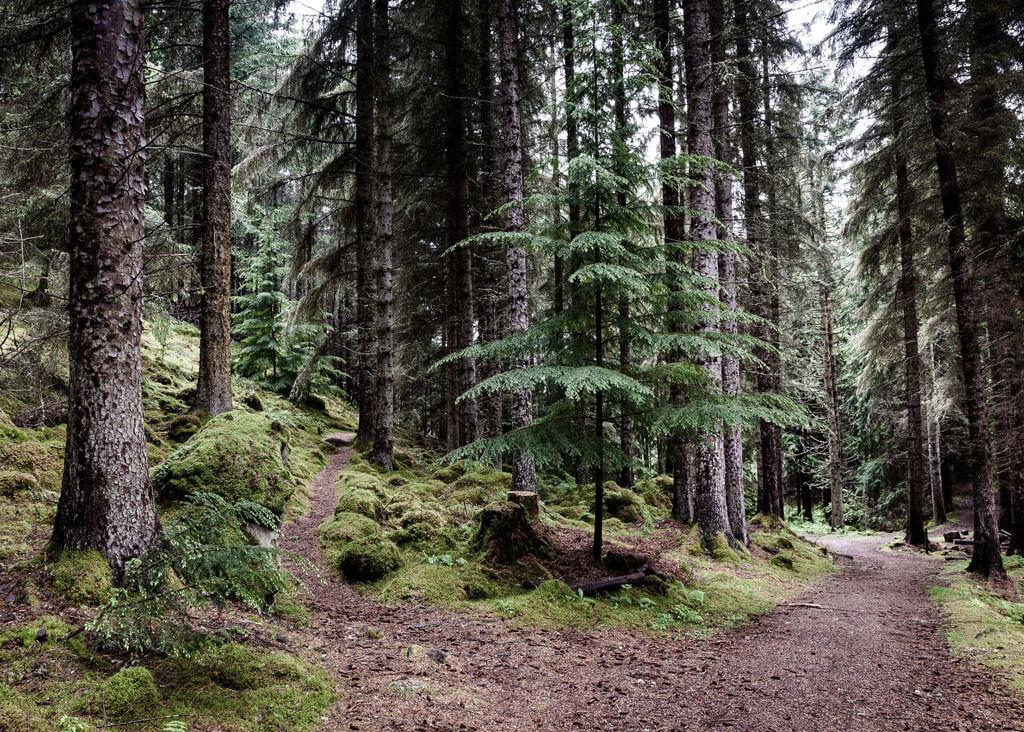 Skoven plakat