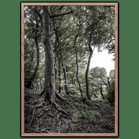 Bøgetræ plakat