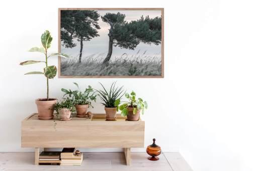 Fyrretræer interior
