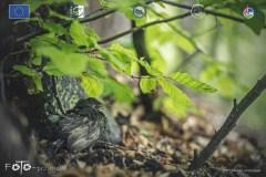 Plener-01-FOTO-Przygoda-w-Świdwinie-Wiosna-19-0157b