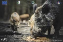 Plener-02-FOTO-Przygoda-w-Świdwinie-Wiosna-19-0979b