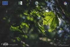 Plener-03-FOTO-Przygoda-w-Świdwinie-Wiosna-19-1527b