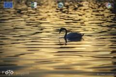 Plener-04-FOTO-Przygoda-w-Świdwinie-Wiosna-19-2233b