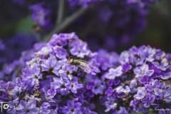 FOTO-Przygoda-w-Połczynie-Zdroju-Wiosna-19-Aleksandra-Malesza-026a