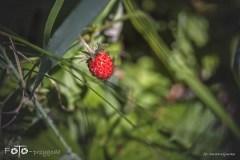 FOTO-Przygoda-w-Połczynie-Zdroju-Wiosna-19-Dorota-Kijowska-037a