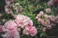 FOTO-Przygoda-w-Połczynie-Zdroju-Wiosna-19-Irena-Adamska-001a