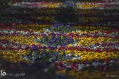 3-FOTO-Przygoda-w-Połczynie-Zdroju-Wiosna-19-0606b