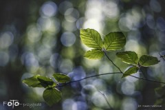 5-FOTO-Przygoda-w-Połczynie-Zdroju-Wiosna-19-1665b