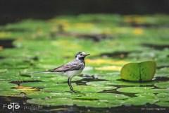 7-FOTO-Przygoda-w-Połczynie-Zdroju-Wiosna-19-2647b