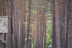FOTO-Przygoda-w-Świdwinie-Wiosna-19-Bartosz-Głasek-008a