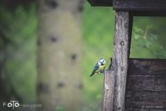 FOTO-Przygoda-w-Świdwinie-Wiosna-19-Bartosz-Głasek-017a