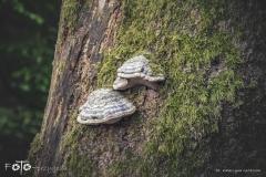 FOTO-Przygoda-w-Świdwinie-Wiosna-19-Katarzyna-Goździela-010a