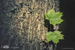 FOTO-Przygoda-w-Świdwinie-Wiosna-19-Katarzyna-Staniszewska-054a
