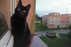 FOTO-Przygoda-w-Świdwinie-Wiosna-19-Krzysztof-Weinar-111a