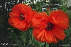 FOTO-Przygoda-w-Świdwinie-Wiosna-19-Magda-Jeziorna-068a