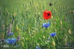 FOTO-Przygoda-w-Świdwinie-Wiosna-19-Magdalena-Jakubczak-039a