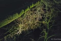 FOTO-Pstryk w plenerze - Goleniów Nocą [Luty 19] - Anna Kowalska 004b