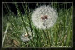 Foto-pstryk nad Iną [Kwiecień 18] 021