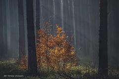 Grzybobranie [Listopad 18] 087b