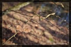 Alicja Szkołut [Kwiecień 18] 003 _Fotorgotowe