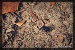 Alicja Szkołut [Kwiecień 18] 005 _Fotorgotowe
