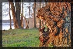 Hubert Łoński [Kwiecień 18] 012_Fotorgotowe
