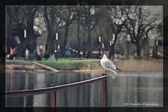 Klaudia Kisarewska [Kwiecień 18] 001_Fotorgotowe
