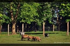 Roksana Trokielewicz [Kwiecień 18] 269_Fotorgotowe