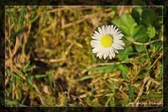 Wojtek Demko [Kwiecień 18] 015_Fotorgotowe
